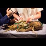 Marijs Boulogne: The Anatomy Lesson - A Forensic Fairytale